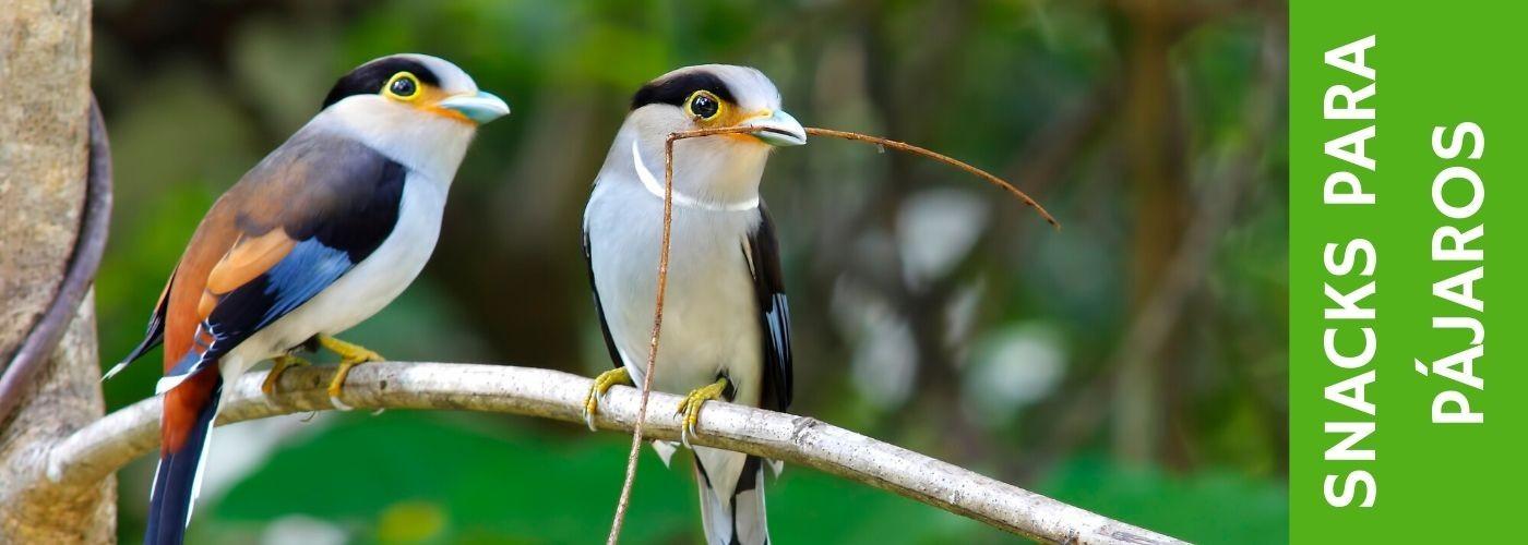 Snacks para Pájaros