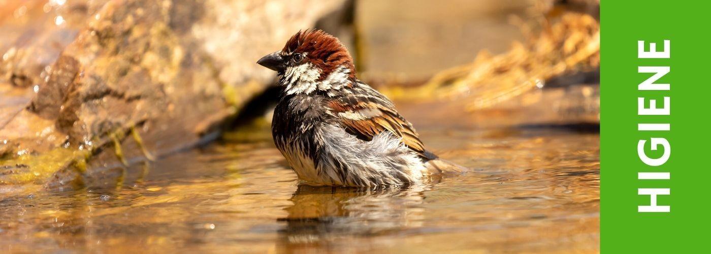 Limpieza e Higiene para tus pájaros.